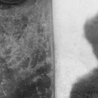 Cielo sulla palude | Augusto Genina (1949)